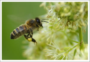 Beekeeping, Honey and Beeswax products Wiltshire - 07974 108625